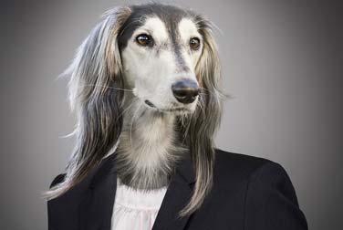 Verrückt: Diese Frau möchte lieber ein Hund sein