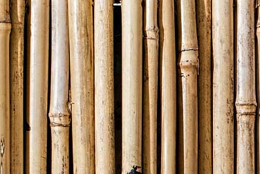 Kleine Peitschenkunde – Der Rohrstock
