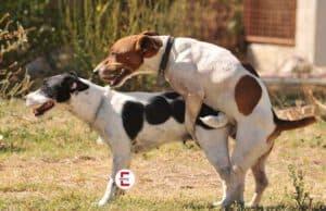 Nachgefragt: Haben auch Tiere Analsex miteinander?