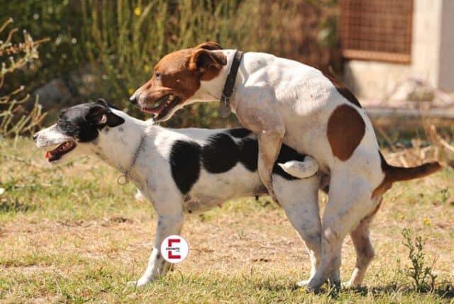 Haben auch Tiere Analverkehr miteinander?