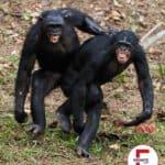 Haben auch Tiere Analsex miteinander?