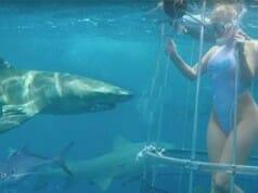 Pornodarstellerin vom Hai blutig gebissen – Fake?