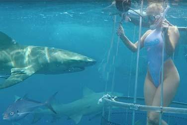 Vom Hai blutig gebissen: Pornodarstellerin angegriffen